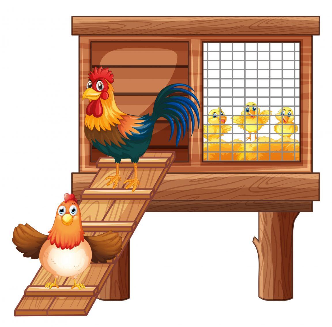 merawat kandang ayam broiler