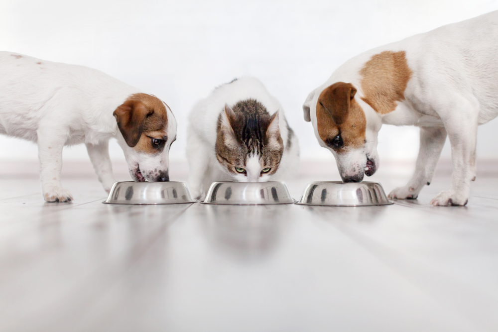 Dogs,And,Cat,Eating,Food